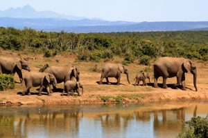6 Tips To Remember When Choosing The Perfect South Africa Holiday Packages